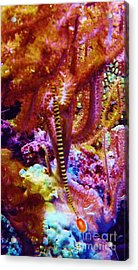 Dance Of The Pinfish Acrylic Print by Brigitte Emme