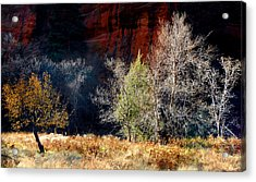 Dance Of Trees Acrylic Print by Peter Cutler