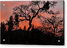 Acrylic Print featuring the photograph Dance With Me by Julia Hassett