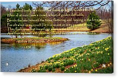 Dances With The Daffodils Acrylic Print by Bill Wakeley