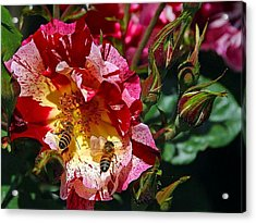 Dancing Bees And Wild Roses Acrylic Print by Absinthe Art By Michelle LeAnn Scott