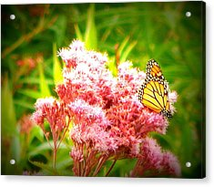 Dancing Butterfly Acrylic Print