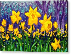 Dancing Daffodils    Cropped Acrylic Print by John  Nolan