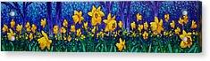 Dancing Daffodils  Acrylic Print