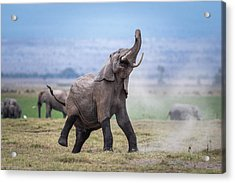 Dancing Elephant Acrylic Print by Jeffrey C. Sink