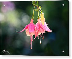 Acrylic Print featuring the photograph Dancing In The Wind by Mariarosa Rockefeller