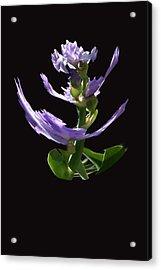 Dancing Iris 1 Acrylic Print