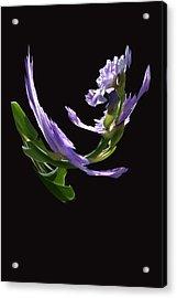 Dancing Iris 2 Acrylic Print