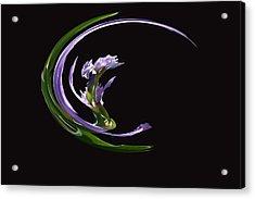 Dancing Iris 3 Acrylic Print