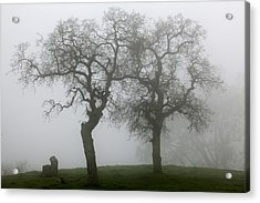 Dancing Oaks In Fog - Central California Acrylic Print by Ram Vasudev