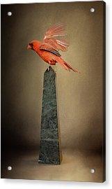 Dancing On Marble Acrylic Print by Jai Johnson