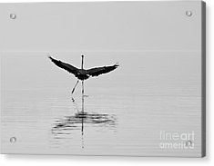 Dancing On The Water Acrylic Print by Jay Nodianos