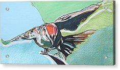 Dancing Sparrow Acrylic Print