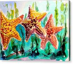 Dancing Stars Acrylic Print by Barbara Richert