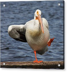 Acrylic Print featuring the photograph Dancing The Funky Chicken by Shane Bechler