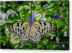 Dancing With Butterflies Acrylic Print by Jon Burch Photography