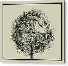 Acrylic Print featuring the photograph Dandelion 6 by Kathy Barney
