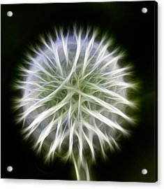 Acrylic Print featuring the photograph Dandelion Abstract by Omaste Witkowski