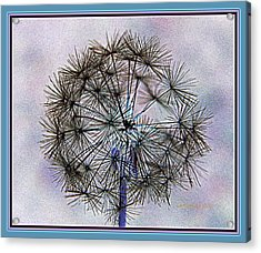 Dandelion Blue And Purple Acrylic Print by Kathy Barney