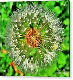 Dandelion Circle Acrylic Print