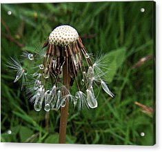 Dandelion Diamonds Acrylic Print