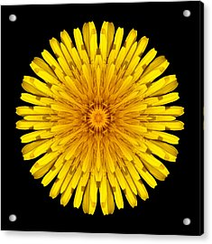 Acrylic Print featuring the photograph Dandelion Flower Mandala by David J Bookbinder