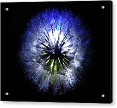 Dandelion Landscape Acrylic Print