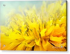 Dandelion  Acrylic Print by Mythja  Photography
