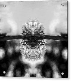 Dandelion Reflection Acrylic Print by Tommytechno Sweden
