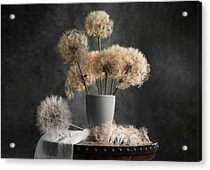 Dandelion Seed Pod Acrylic Print by Lydia Jacobs