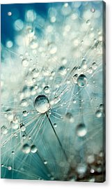 Acrylic Print featuring the photograph Dandelion Starburst by Sharon Johnstone