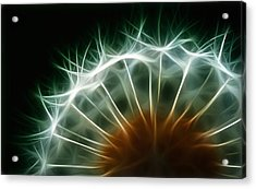 Dandelion Acrylic Print by ISAW Gallery