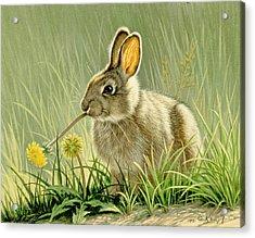 Dandi-nibbler Acrylic Print