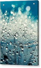 Acrylic Print featuring the photograph Dandy Blue And Drops by Sharon Johnstone