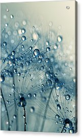 Acrylic Print featuring the photograph Dandy Blue Shower by Sharon Johnstone
