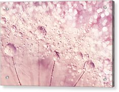 Dandy In Sparkling Pink Acrylic Print by Sharon Johnstone