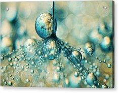 Dandy Sprinkle Acrylic Print by Sharon Johnstone