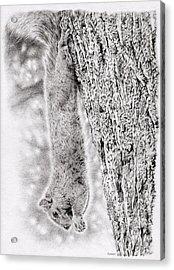 Dangling Squirrel Acrylic Print