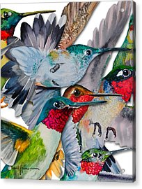 Da133 Hummingbirds By Daniel Adams Acrylic Print