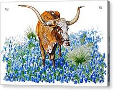 Da102 Longhorn And Bluebonnets Daniel Adams Acrylic Print