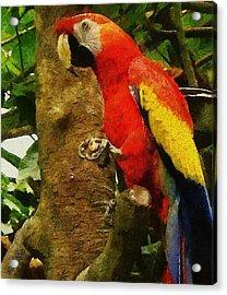 Danse Macaw Acrylic Print by Jeff Kolker