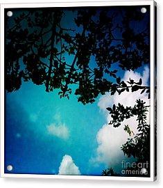 Dappled Sky Acrylic Print