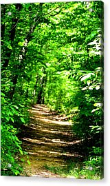 Dappled Sunlit Path In The Forest Acrylic Print by Maria Urso