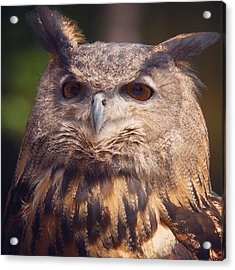 Dare I Say Owls Are A Hoot? Acrylic Print by Heidi Hermes