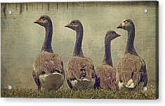 Dare To Be Different Acrylic Print by Kathy Jennings