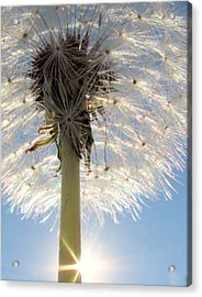 Dare To Be Different Acrylic Print