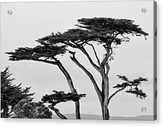 Dark Cypress Acrylic Print by Melinda Ledsome