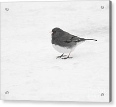 Acrylic Print featuring the photograph Dark-eyed Junco In Winter by Anita Oakley