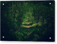 Dark Forest Acrylic Print by Daniel Precht