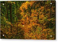 Dark Forest Acrylic Print by Dennis Bucklin